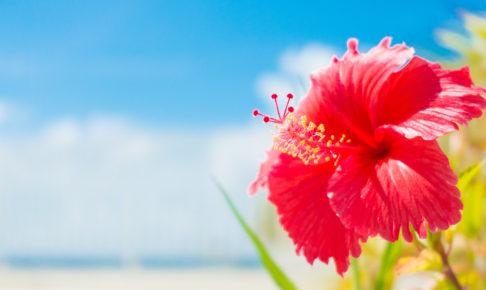 沖縄でお土産買うなら